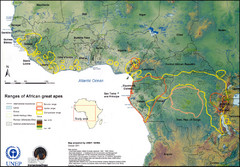 African Great Apes Habitat Range Map