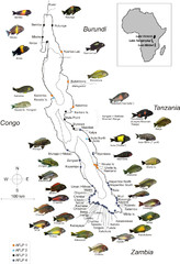 Fish of Lake Tanganyika Map