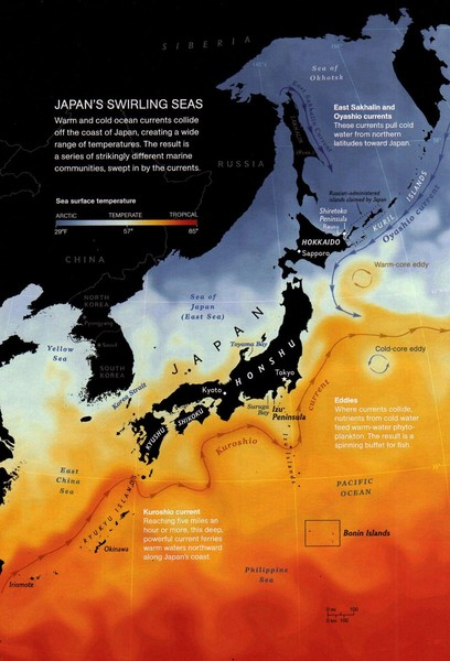 Japan's Ocean Currents Map