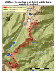 Mt. Evans Road Wildflower Viewing Map